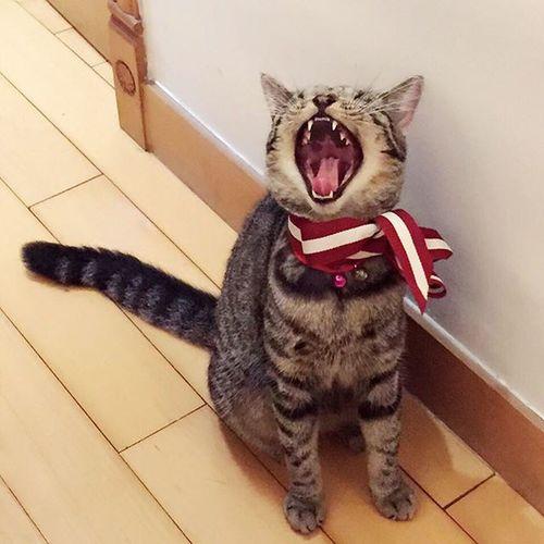 Sleepyyyyy💤💤💤 Cat Cats Pet Petlover Sleepy Cute Funny Pets Lovely Cuteness Sleep Petstagram Catsofinstagram Cat Lovers Cat♡ Lovepet Petal Pets Corner Petpet HongKong