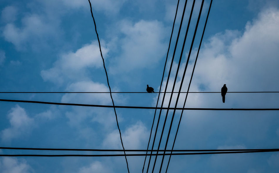 Silhouette image of line of wire over on electric pole and little birds with cloudy dark blue sky background, selective focus. Calm Couple Love Animal Themes Background Bird Cable Chaotic Connection Day Electric Pole Friendship Low Angle View No People Outdoors Perching Relax Rest RISK Silhouette Sky Skyscraper Tangle Togetherness Wire