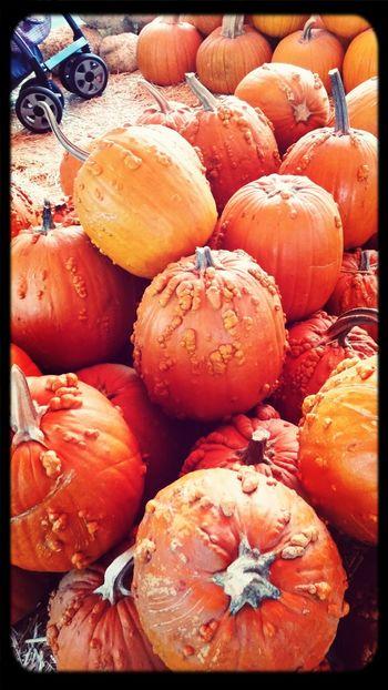 Pumpkin!Pumpkin! PumpkinPatch🎃