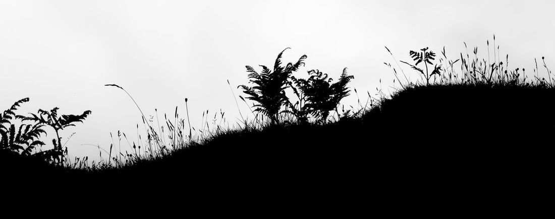 Beauty In Nature Black & White Blackandwhite Photography Bracken Darkness And Light Fern Field Fields Fieldscape Grass Grass Grassland Grassy Landscape Light And Shadow Monochromatic Monochrome Nature Shade Silhouette Silhouette Silhouette_collection Silhouettes Silhoutte Sky