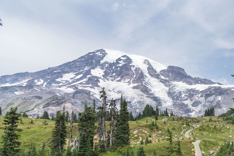 Mount rainier national park in washington state, view of the volcanic dome with pine trees.