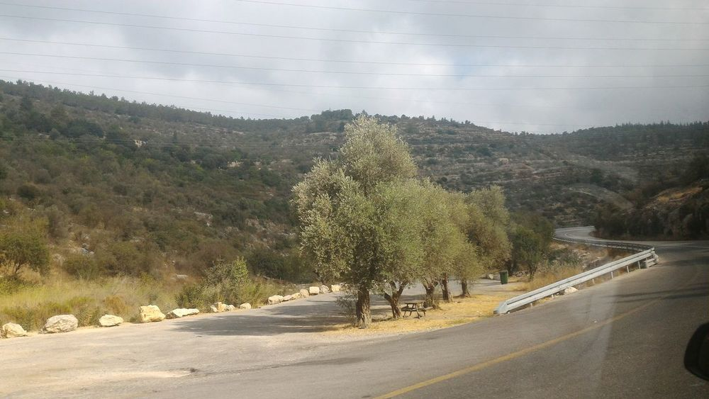 Driving Israel Trees Be'er Sheva Desert Mountains Range Middle East Greenery_scenery Highway Reflection Window Forest Photography Foreground Focus No People Landscape_Collection
