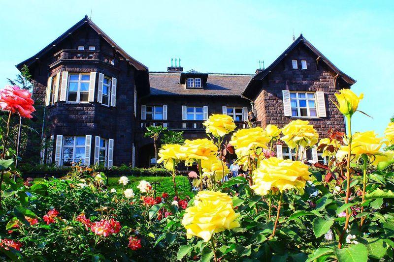旧古河庭園 Flower Building Exterior Yellow Built Structure Architecture Growth Nature