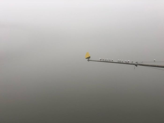 Foggy Main in Frankfurt Bridge In The Fog Foggy Bridge Fog Sea Gulls Copy Space Low Angle View Flying Yellow Outdoors No People Day Bird