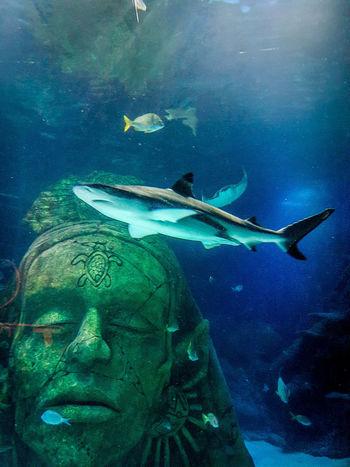 Sea Life Aquarium Sealife UnderSea Animal Themes Animal Wildlife Day No People Sea Sea Life Sea Life, Sealifeaquarium Shark Sharks Swimming UnderSea Underwater underwater photography