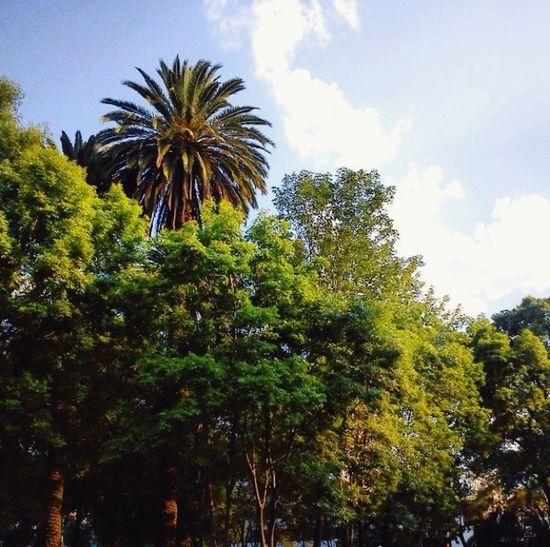 Macro Beauty Perfect Enjoying The View Mexico Beautiful Nature Relaxing Beautiful Day EyeEm