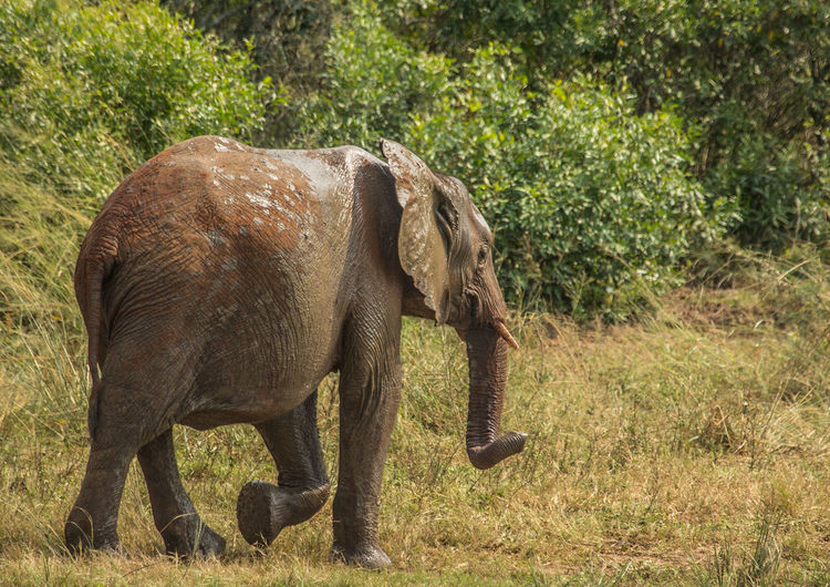 Side view of elephant in forest