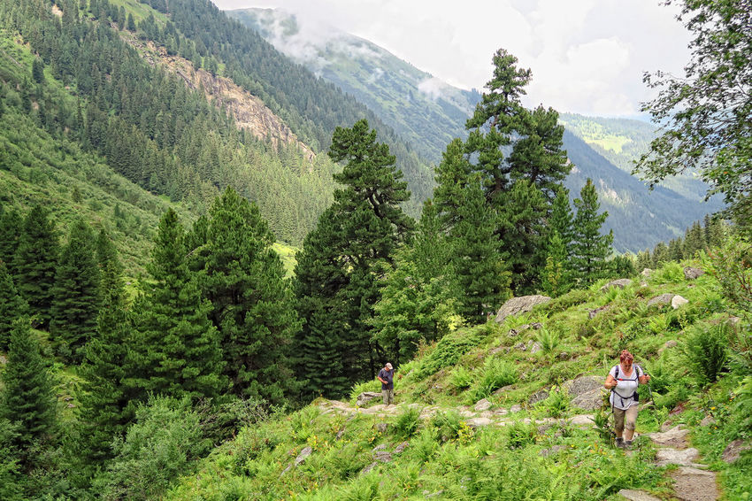 People hiking through the alpine landscape of Zillertal valley in summer time. view into the Gerlostal valley. Adult Adults Only Adventure Alps Alps Austria Eco Tourism Gerlos Gerlospass Green Color Hiker Hiking Hikingadventures Landscape Mountain People Tree Vacations Zillertal Zillertal Alps