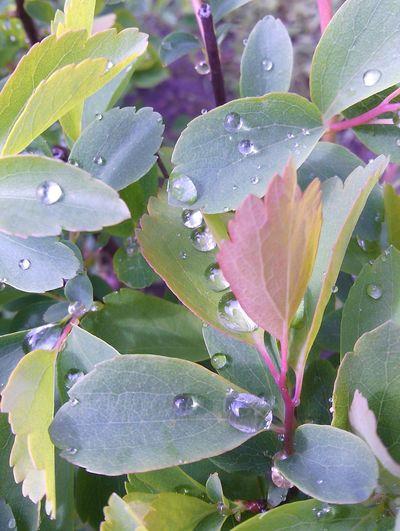 Freshness Raindrops Rainy Day