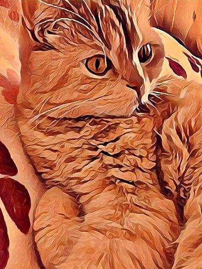 Pet Portraits Missia Pats My Life ❤ мимими❤ My Like Cat Cat рыжик My Love Само дабро😍 Милашка😍💗💞 Моя зая ❤