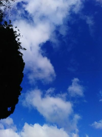 Typhoon has passed! Blue Sky Nature No People Cloud - Sky Day Tree Backgrounds Beauty In Nature Outdoors Typhoon