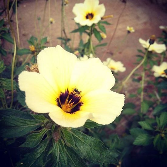Travel Morning Flower Flowers Ontheroad Coimbatore Flowerbeds Bees Honey Food BreakfastTime  Beautiful Catchy Attractive Loveit Takeapicture