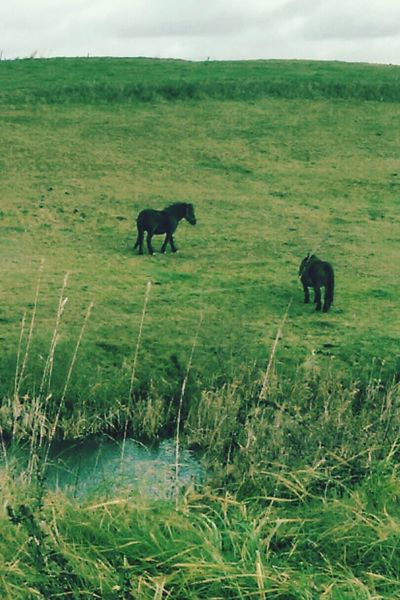 Horses, horse, nature, Grass Nature Animals In The Wild Animal Themes Mammal Outdoors No People Day Landscape Lion - Feline