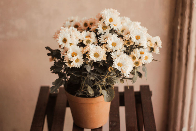 Close-up of flower pot on potted plant against wall