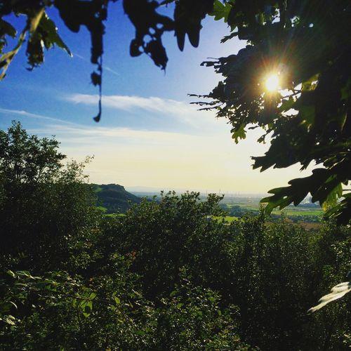 Landscape Landscape_Collection Landscape_photography Sun Trees Frodsham Hill Helsby Hill