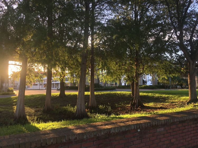 Trees in morning light Tree Nature Outdoors Tranquility Beauty In Nature Sunlight Growth Tranquil Scene Park - Man Made Space Scenics Day Green Color No People Landscape Morning Light