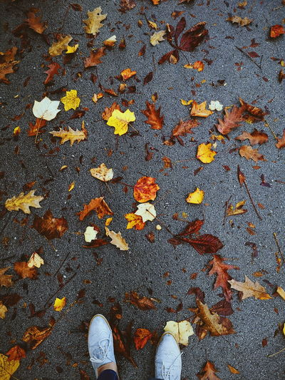 I am learning to love to sound of my feet walking away from things not meant for me... Leaves Foot Shoes Womenshoes Walking Around Autumn Nature Enjoying Life Asphalt Low Section Backgrounds Full Frame Pattern High Angle View Close-up Carpet Surface Autumn Collection Change Empty Road