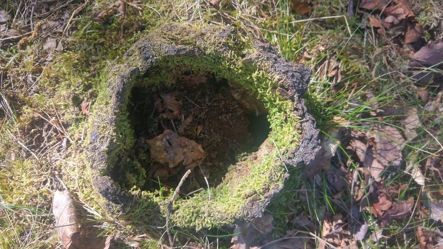 Animal Burrows In The Ground Close-up Day Dead Leaves On The Ground Dead Tree Stump Field Grass High Angle View Hole In The Ground Moss And Lichen Nature No People Outdoors