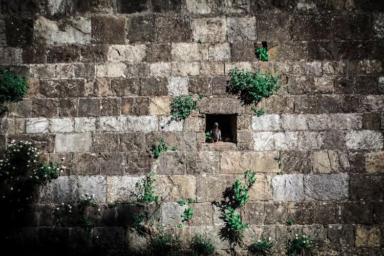 Plants against brick wall