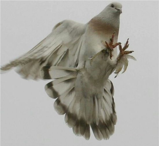 Bird Mid-air Spread Wings Flying Sky Beauty In Nature Air Awesome Shot Fly Wing Timing Perfect Animal Wildlife Wings Wings Of The Sky... Nature