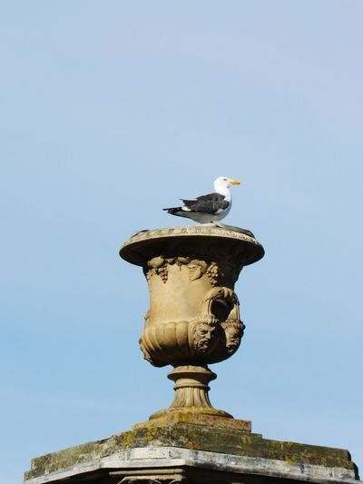 My trophy Seagull Trophy London Greek Architecture Watching Birds Statue Sculpture Water Close-up Sky Carving - Craft Product Historic Art