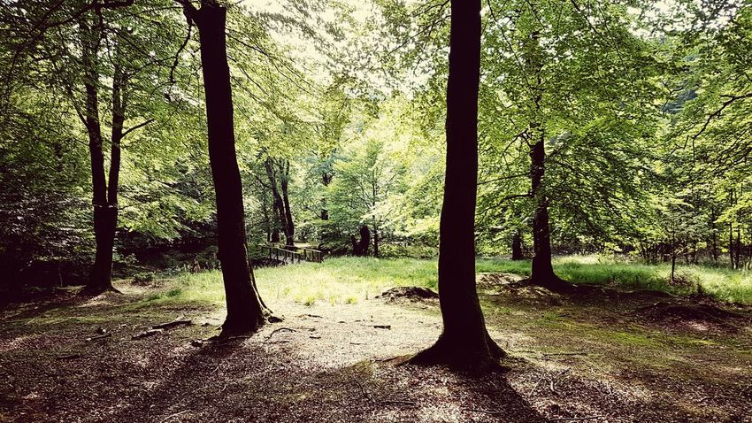 A walk in the forest Walking Summer Forest Photography Forest Woods Landscape Showcase July Idyllic Scenery Relaxing Samsung Galaxy S7