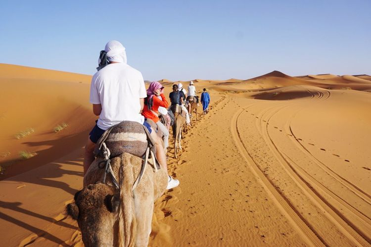Camel riding through the Sahara Desert