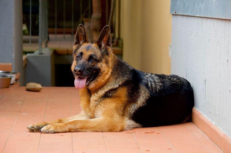 One Animal Pets Domestic Domestic Animals Mammal Animal Themes Dog Canine Animal Day