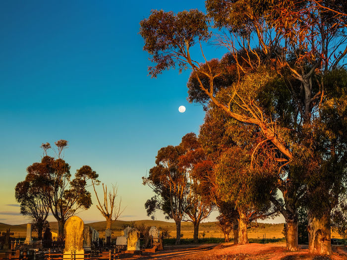 Trees on field at cemetery during sunset