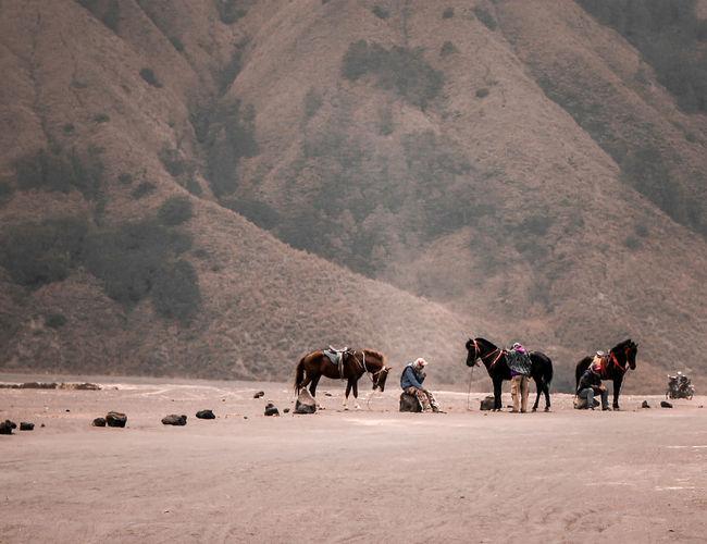 Horses walking on land