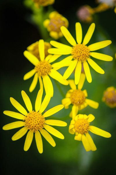Flower Yellow Flower Head Petal Freshness Fragility Beauty In Nature Growth Plant Nature Blooming Pollen Close-up Focus On Foreground No People Day Outdoors Macro