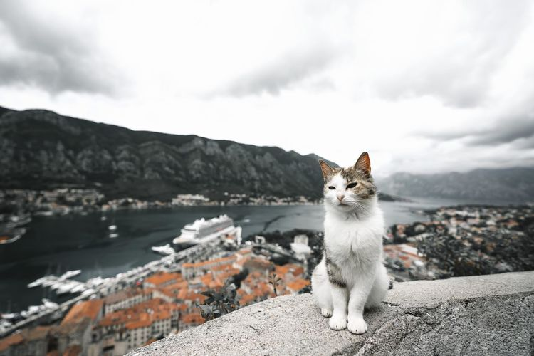 View of a cat on mountain against cloudy sky