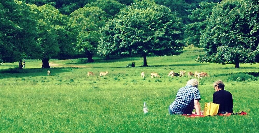 Tree Green Color Grass Field Growth Togetherness Outdoors Nature Day Rear View Tranquility Two People Real People Women Rural Scene Landscape Domestic Animals Scenics Men Adult First Eyeem Photo