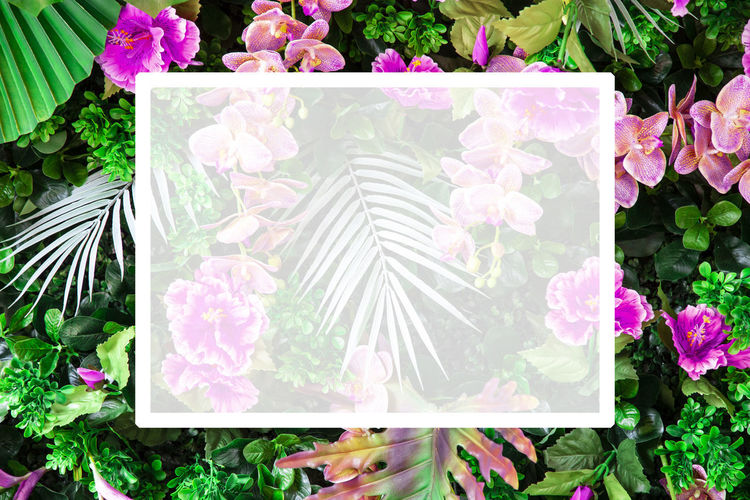 Colorful Tropical leaves foliage plant nature background and white space. Plant Flower Flowering Plant Beauty In Nature Growth Pink Color Nature Freshness Close-up No People Vulnerability  Day Petal Fragility Plant Part Green Color Leaf Flower Head Inflorescence Outdoors Flower Arrangement Copy Space