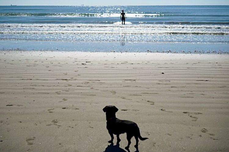 Dog Sea Sea And Sky Check This Out Enjoying Life Sea View Animal Animal Photography Comtemplation Nature Wildlife Wildlovers Love Horizon Over Water Sunny Day Happiness Freedom Lido Di Venezia View Summertime Beach Waterscape Italy