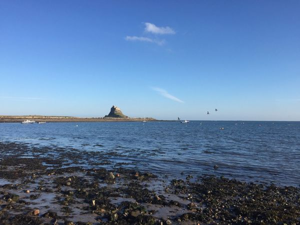 Sea Blue Water Nature Horizon Over Water Beauty In Nature Scenics Tranquil Scene Beach Clear Sky Tranquility No People Sky Day Outdoors Nautical Vessel Lindisfarne Lindisfarne Castle Holy Island