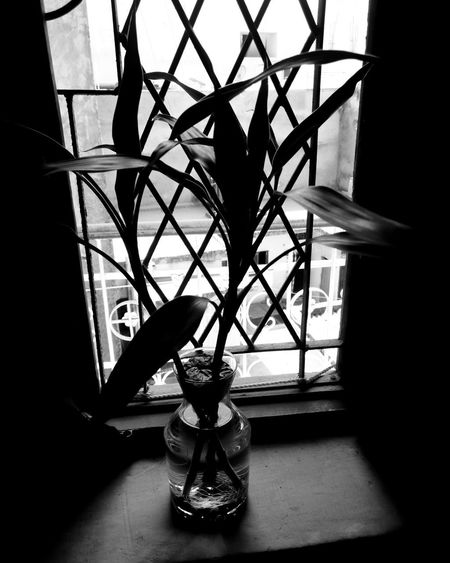 prettiest model... Mobilephotography Room Decor RoomPhotography Room Plant Blackandwhite Posing For The Camera Shadow Window Building Window Sill Residential Structure Building Exterior Residential District Built Structure Architecture Exterior Settlement Skylight