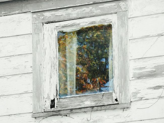 Black And White Window Reflections Colorful Farmhouse Old Farmhouse Tree_collection  Nature Photography Reflection_collection