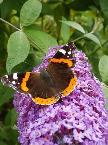 Insect Butterfly - Insect One Animal Animals In The Wild Animal Wildlife Nature Close-up Flower Plant Growth Animal Themes Fragility Beauty In Nature Freshness Pollination No People Leaf Day Outdoors Perching