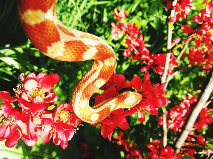 Flower Reptile Red Leaf Branch Living Organism Close-up Animal Themes Plant First Eyeem Photo