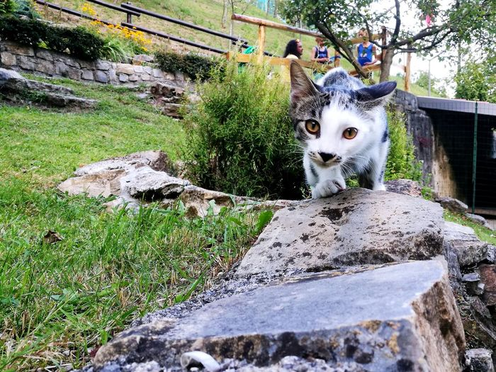 Pet Portraits One Animal Animal Themes Nature Outdoors New Cat 🐱 My Love Tor Baby Cat Ready To Attack Beautiful Games