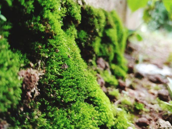 Green wall 😅♥️