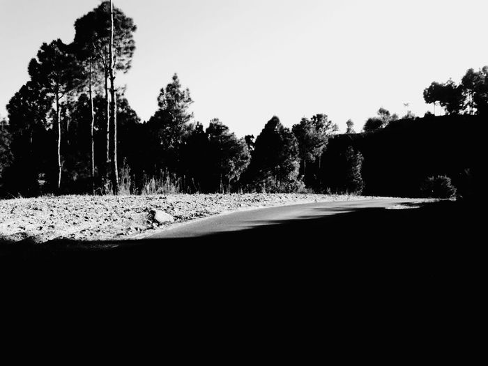 home is where the road leads Silence Skyline Tree Silhouette Pine Tree Sky Landscape Empty Road Country Road