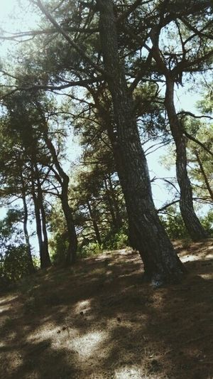 Forest Airfresh Oxygen