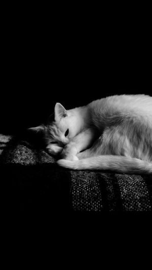 Close-up of cat sleeping against black background