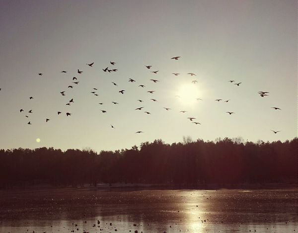 Birds🐦⛅ Lake View Nature Photography Vintage Moments