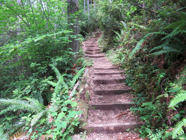 Stairway to Heaven Falls View Trail Forest Hiking Forest Path Olympic Peninsula Olympic Peninsula, Washington Stairs Falls View Forest Forest Pathway Forest Stairs Nature Outdoors Rainforest Staircase Stairs_collection Tranquility