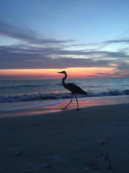 Strolling at sunset Strolling Sunset Colorful Sky Bird Photography On The Beach Florida Life Loving Life