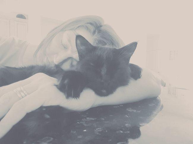 Close-up Companion Night Night, Sleep Tight Resting Sleeping Sleeping Cat Snuggles Snuggling Kitty Tired Working Hard