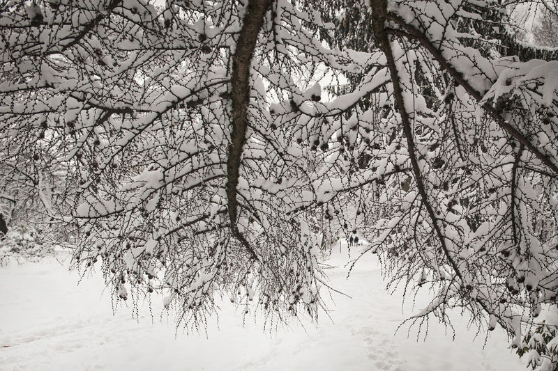 Low angle view of snow covered bare trees
